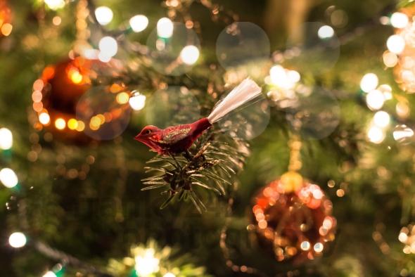 christmas-images-royalty-free-6rxfdhx9