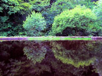 reflections in a mill pond