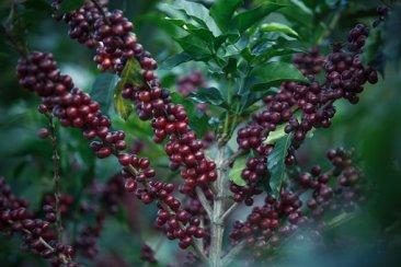 coffee-2540266__340